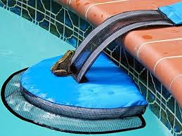 how to keep frogs out of your pool this year for good