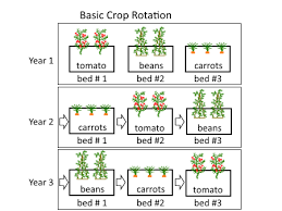 crop rotation systems for annual vegetables deep green permaculture