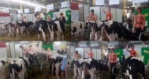 chambre d agriculture tarbes des vegans se sont perdus au salon de l agriculture de tarbes