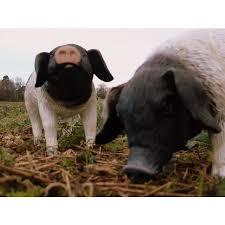 black white pig garden ornament leisure traders