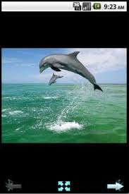 dolphin apk beautiful dolphin wallpaper 2013 9 apk for android aptoide