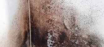 Black Mould In Bathroom Dangerous Recognizing Black Mold What To Look For And Where To Look