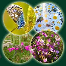 Sensory Garden Ideas Sensory Gardens In School Playground Design