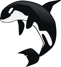 orca clipart transparent pencil and in color orca clipart