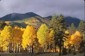 Prettiest Places In The Us Beautiful Aspen Trees In Lockett Meadow Near Flagstaff Az In The