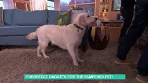 watch this morning dog causes chaos in hilarious pet tech blunder