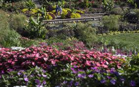 Sunken Gardens Family Membership Have I Got A Brick Story For You Romance Among The Bloomers At