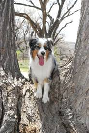 lonesum d australian shepherds you wont find this design anywhere else with friends or family