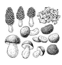 mushroom vector images over 18 000