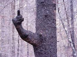 flipping you tree lol tree s and beautiful