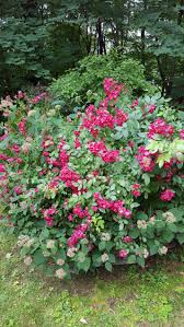 flowering plants gardendaze
