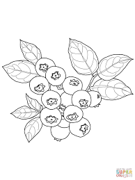 blueberry coloring pages free coloring pages