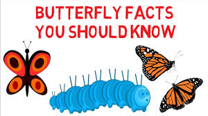 butterfly facts for kids information on butterfly simply e