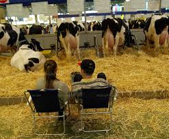 chambre d agriculture isere bourgoin jallieu la grande transhumance