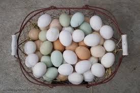 what to feed chickens to lay more eggs