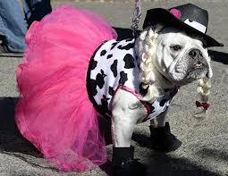 our favorite dog halloween costumes k9 carfence