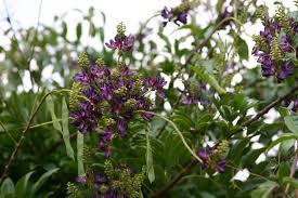 climbing plants erica glasener