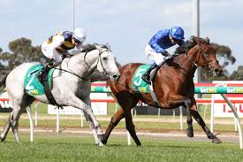 lexus cup australia qewy carries hopes in 2016 melbourne cup field sports news australia