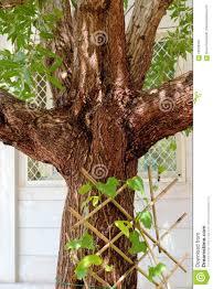 damas tree symmetrical branched stock image image 70039555