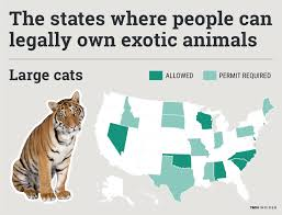 Which State Has The Most Dog Owners Per Capita According To 2016 Stats How Many Tigers Live In The United States Business Insider
