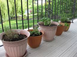 Herb Container Garden - several good tricks to ensure your herb container garden success