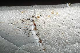 Mattress Cover Bed Bugs What Mattress Encasements Are And How They Are Used In Bed Bug