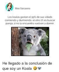 Angry Koala Meme - 25 best memes about angry koala bears angry koala bears memes