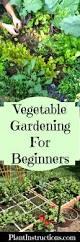 vegetable gardening for beginners guide plant instructions