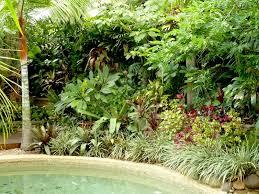 tropical garden plants design ideas tropical garden plants make