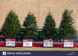 types of christmas trees christmas tree types blue spruce