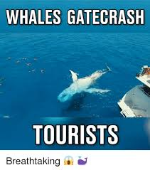 Whaling Meme - 25 best memes about whaling whaling memes
