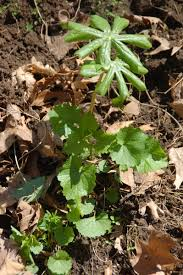 iowa native plants fresh mushrooms hold the mustard iowa public radio