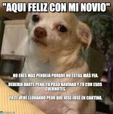 Memes De Chihuahua - aqui feliz con mi novio el chihuahua meme en memegen