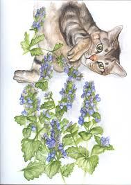 Catnip Flower - golden poppy blog catnip