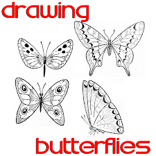 butterfly drawing easy methods how to draw butterflies by