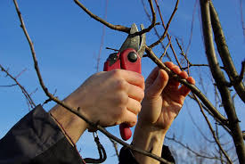 how and when to prune gardening tips with j s