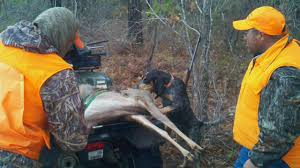 bluetick coonhound mix sale reynolds forestry consulting quality timber management in