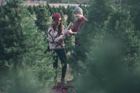christmas tree farm proposal rebecca u0026 justin in havana