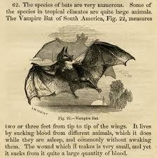 vampire bat free vintage halloween clip art original scan from