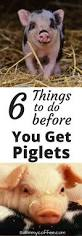 7 best raising pigs images on pinterest backyard farming