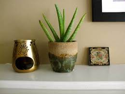 best plants for clean indoor air