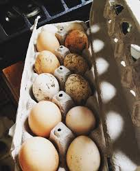 can you make money selling farm fresh eggs chickens eggs and