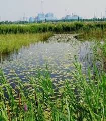 native water plants venice lagoon protected for future generations u2013 access water