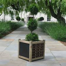 Topiary Plants Online - topiary tree gifts for sale buy online send a tree gift