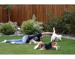 Landscaping Ideas For Backyard With Dogs 134 Best Dog Runs Fence Borders Images On Pinterest Garden Ideas