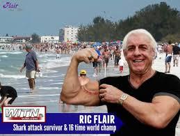 Ric Flair Memes - ric flair got bit by a shark this weekend bicep shark rebrn com