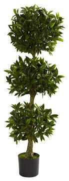 bay leaf topiary indoor outdoor 5 contemporary