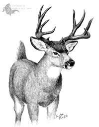 mule deer by sesroh on deviantart