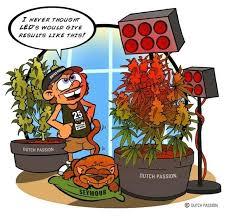where to buy plant lights where to buy grow lights led online canada senilemomentia com