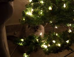10 cats that have christmas magic in their eyes